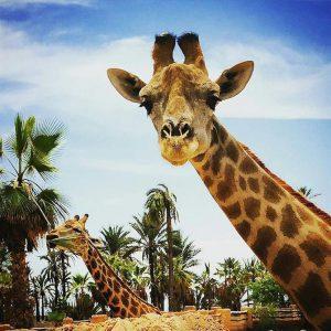 5. Rio Safari Park, Elche, Alicante