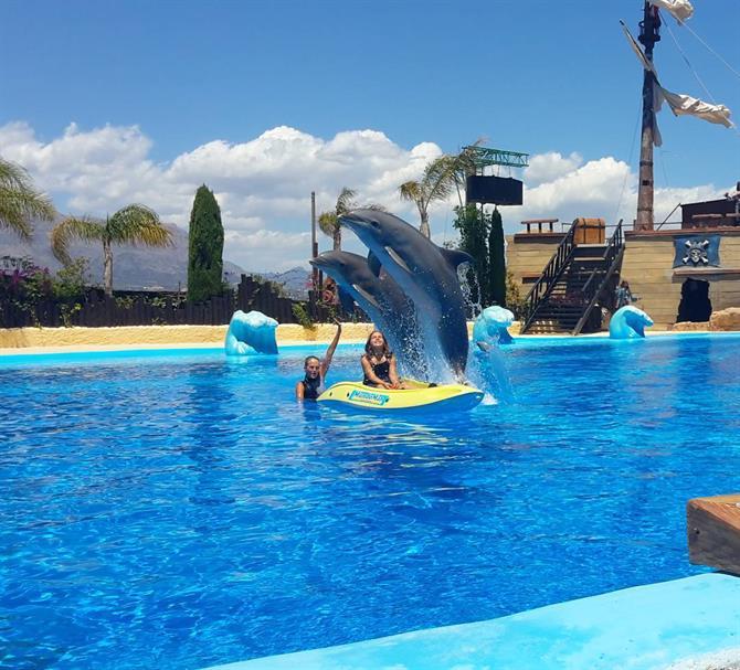 7. Swim with Dolphins, Mundomar, Benidorm
